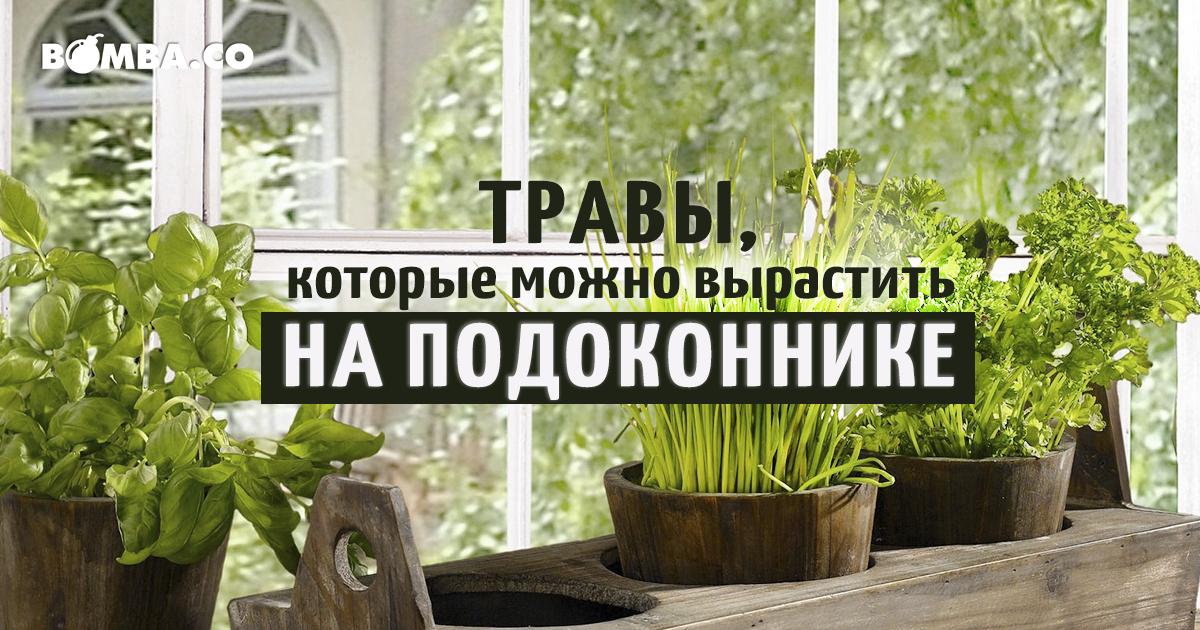 Полезные растения выращивание дома 42
