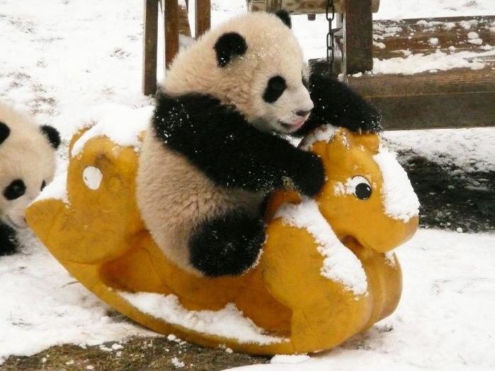 2-Панда катается на лошадке в детском саду в Чэнду