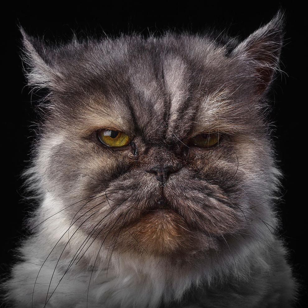 Портрет кота 1
