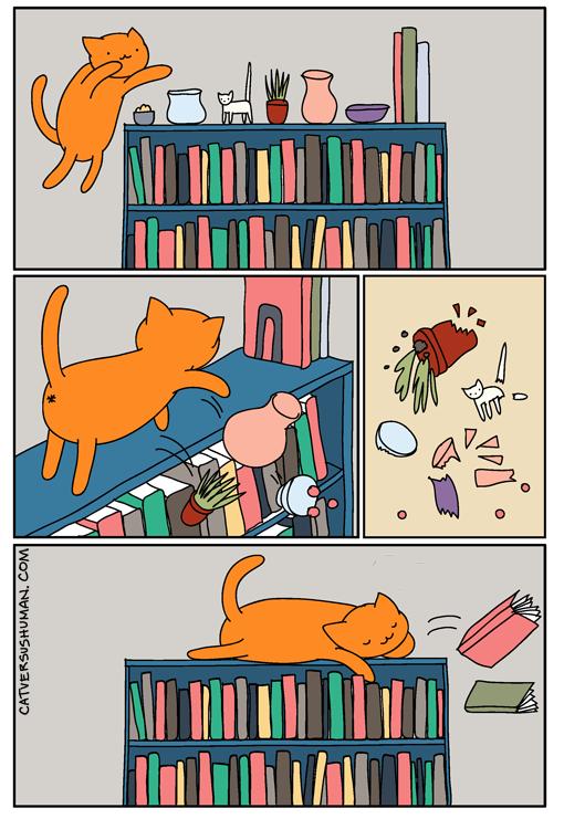 Cat-Myth-1