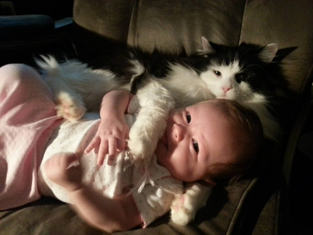 cute-a-little-baby-and-cat-7