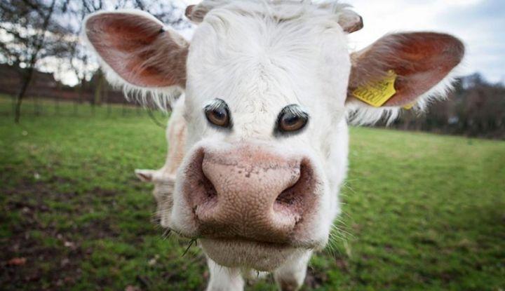 Картинки по запросу Как бы выглядели животные, если бы их глаза были спереди