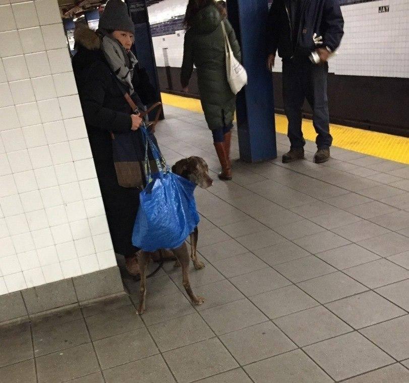 Собака в сумке в Нью-Йорке