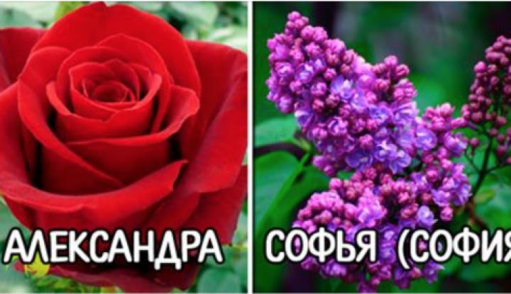 Цветок по имени